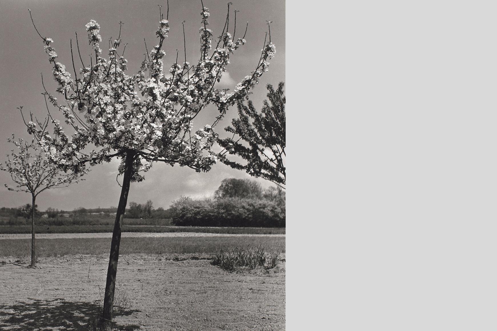 Emmy Andriesse (1914-1953) Little flowering trees Arles 1951-1952 Van Gogh Museum. Leiden University Library / Joost Elffers